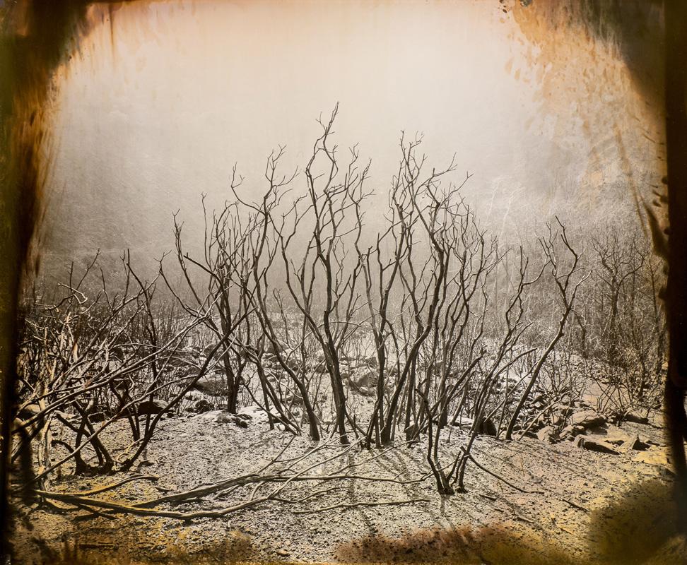 Bob Bozonelos: Burning Bush (Luther Gerlach)