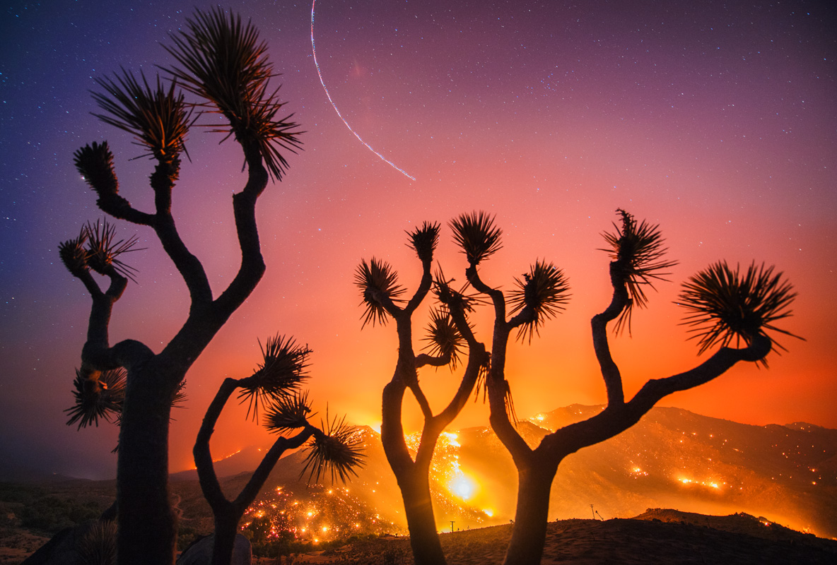 Sean Leach: Burned Joshua Trees, Erskine Fire (Stuart Palley)
